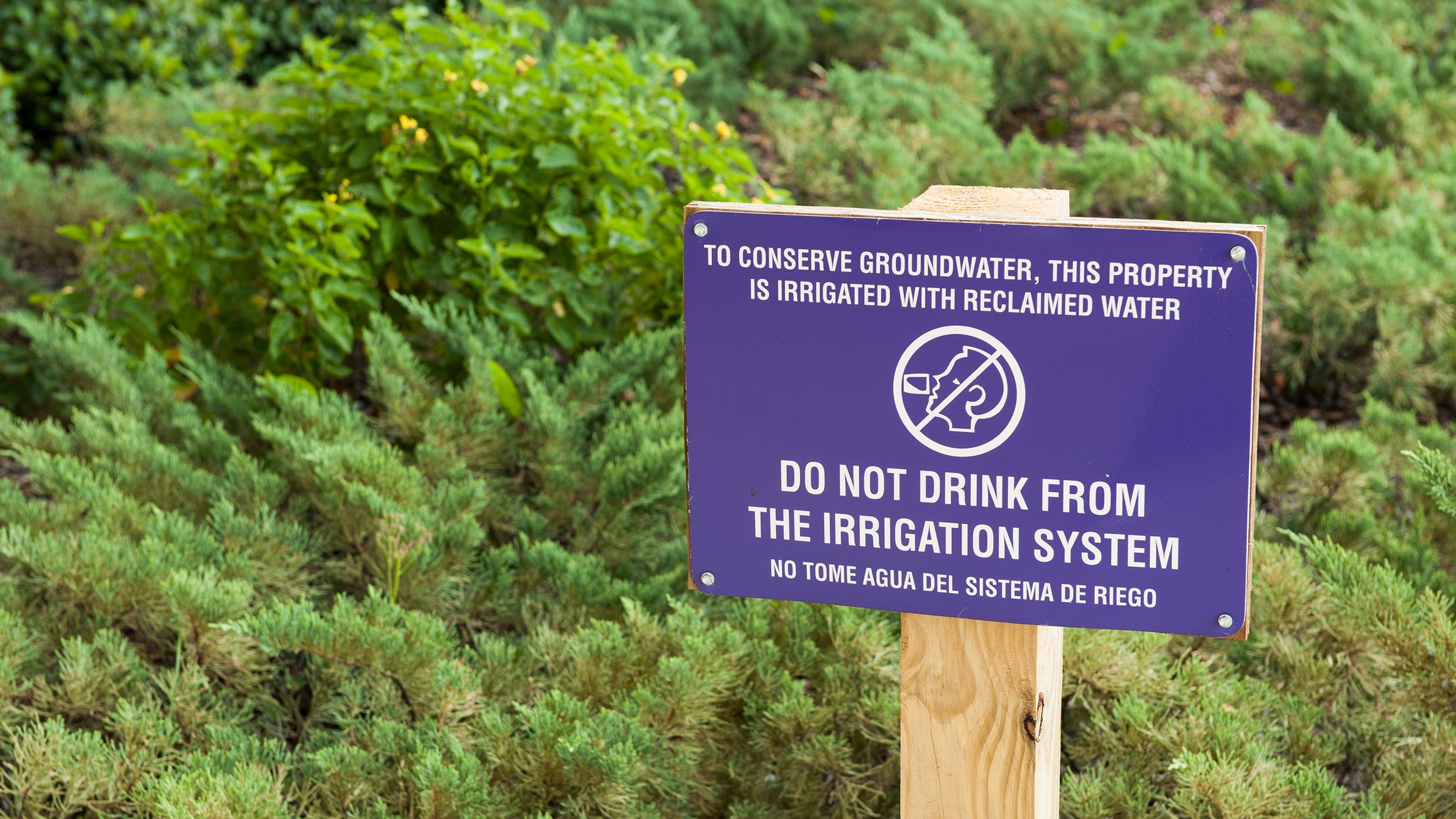 """Purple """"don't drink from water system"""" sign"""