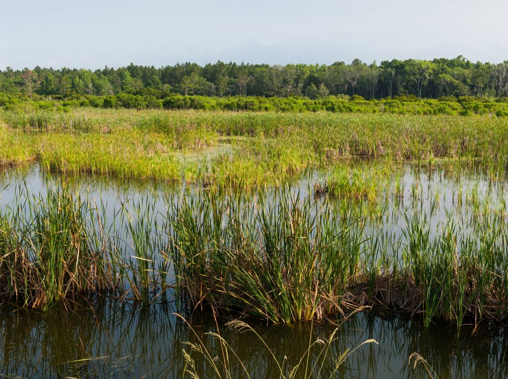 A view of tall grass at District's Deep Creek Conservation Area
