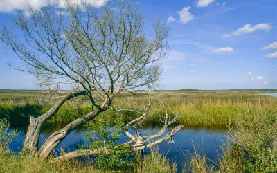 Lone tree at St. Marys River