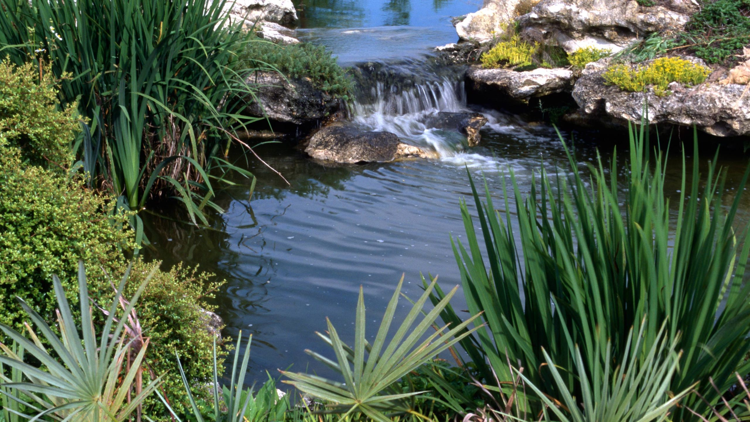 Small waterfall in a pond