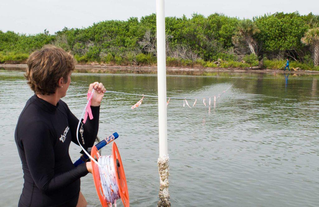 Lori Morris establishing a transect line in the Mosquito Lagoon