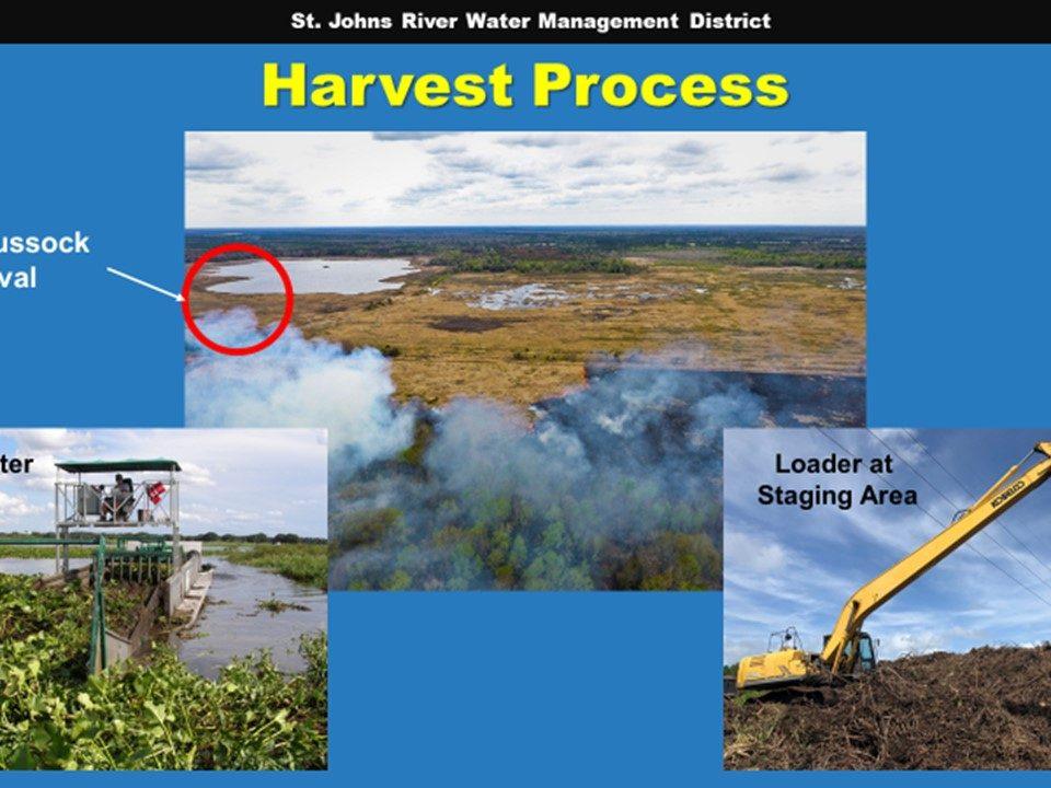 Orange Creek mechanical harvest Powerpoint slide
