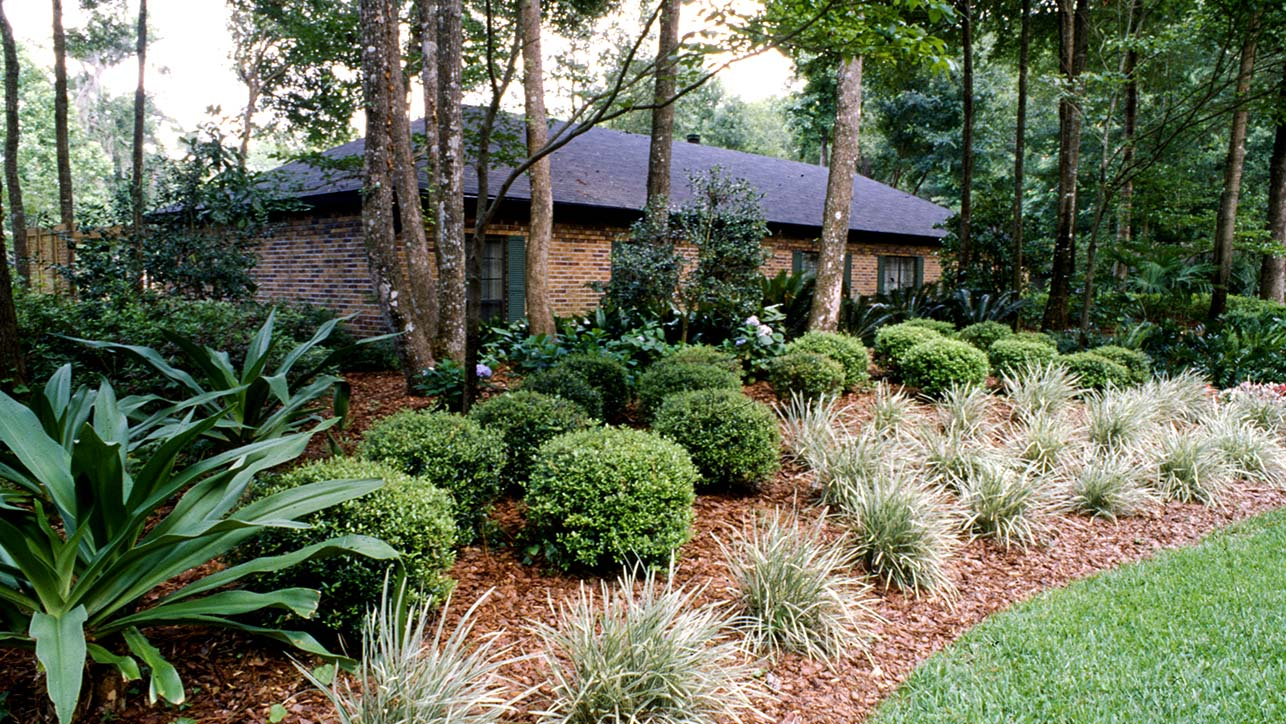 Home with many trimmed bush at the front