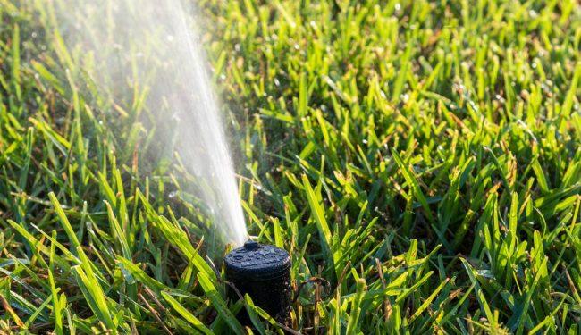 Single sprinklers spraying water