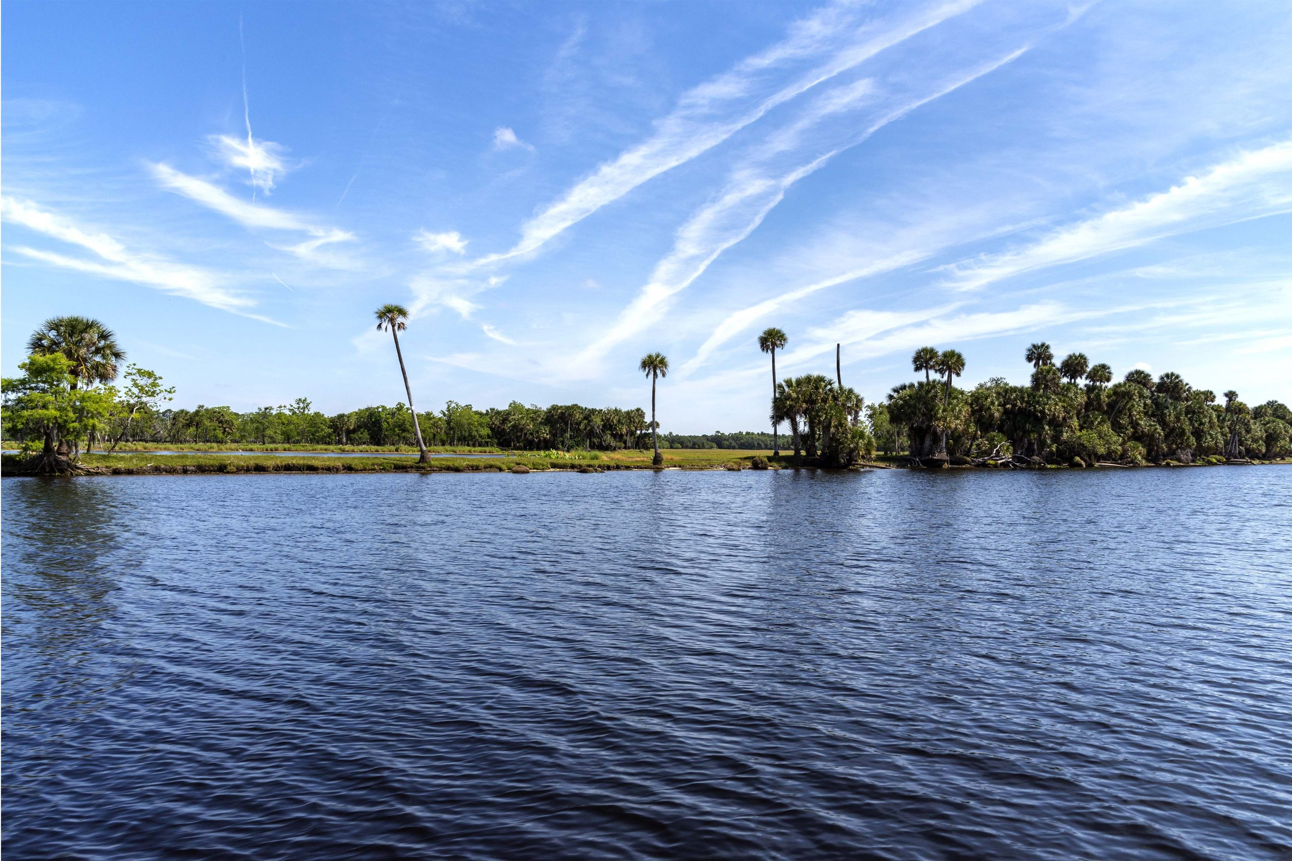 Palm trees reach for the sky along the St. Johns River's middle basin