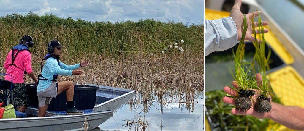 District contractors tossing native aquatic vegetation