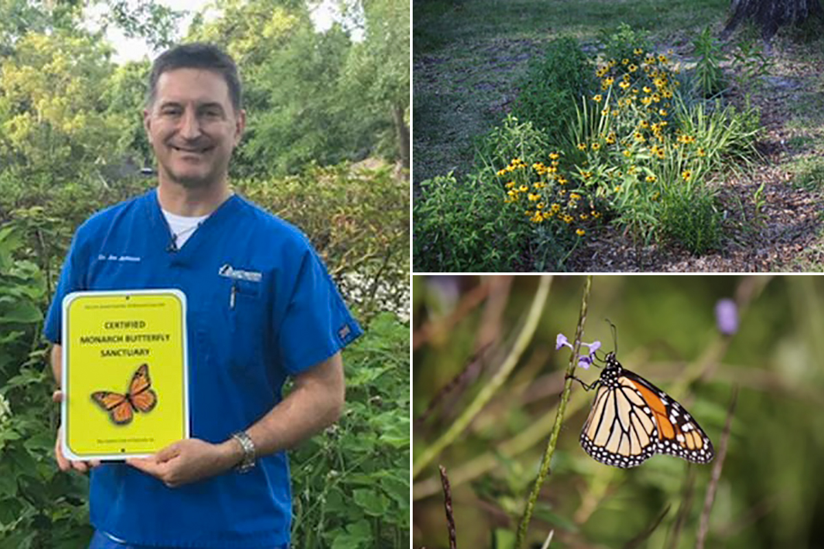 Multiple photos showing a butterfly yard