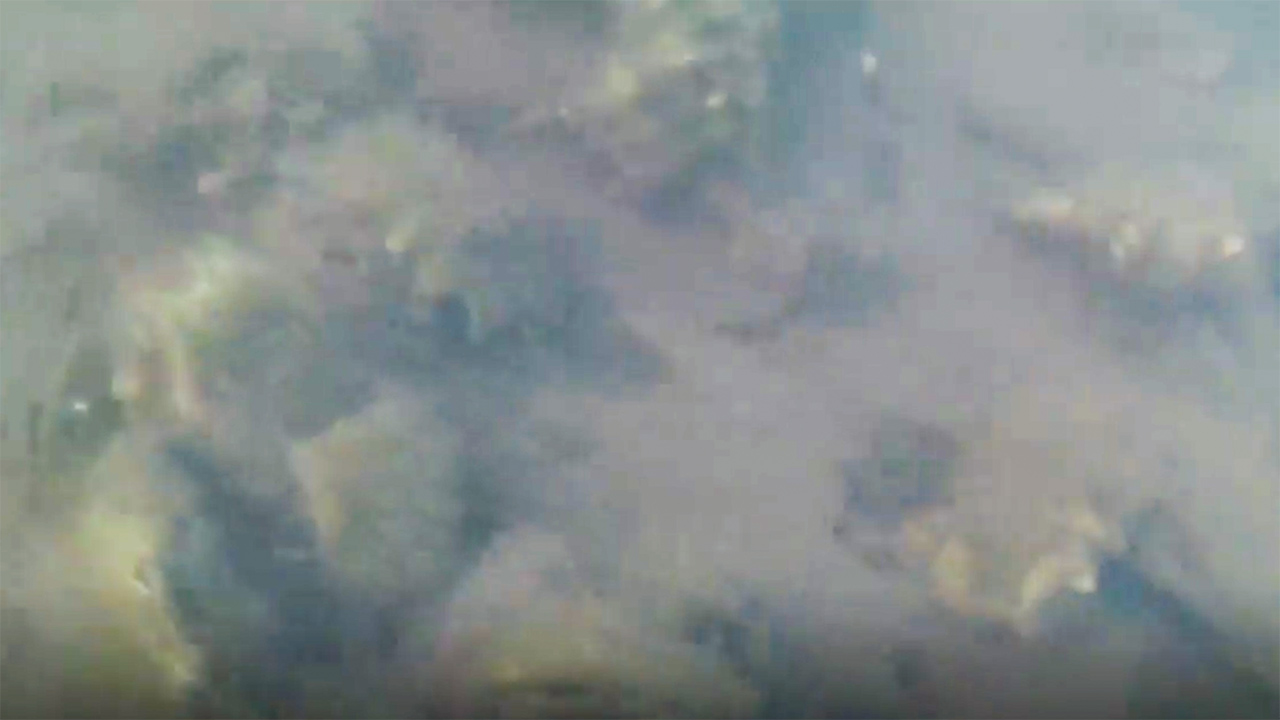 Underwater image of oysters